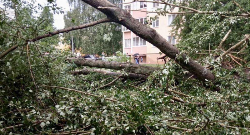 дерево-гроза-ураган-лето