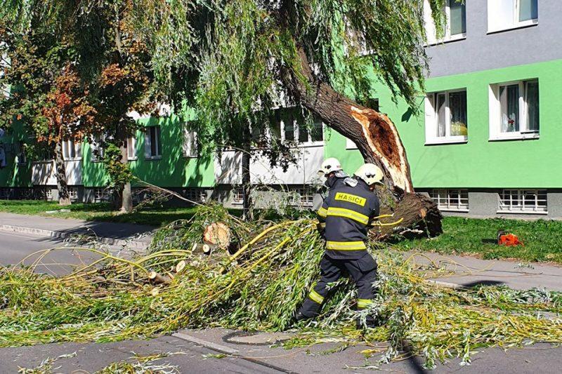 ураган-дерево-пожарный