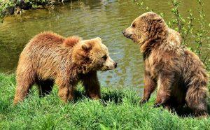 медведь-природа-лес