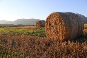 поле урожай сельское