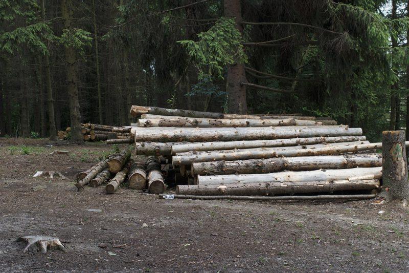 бревна лес