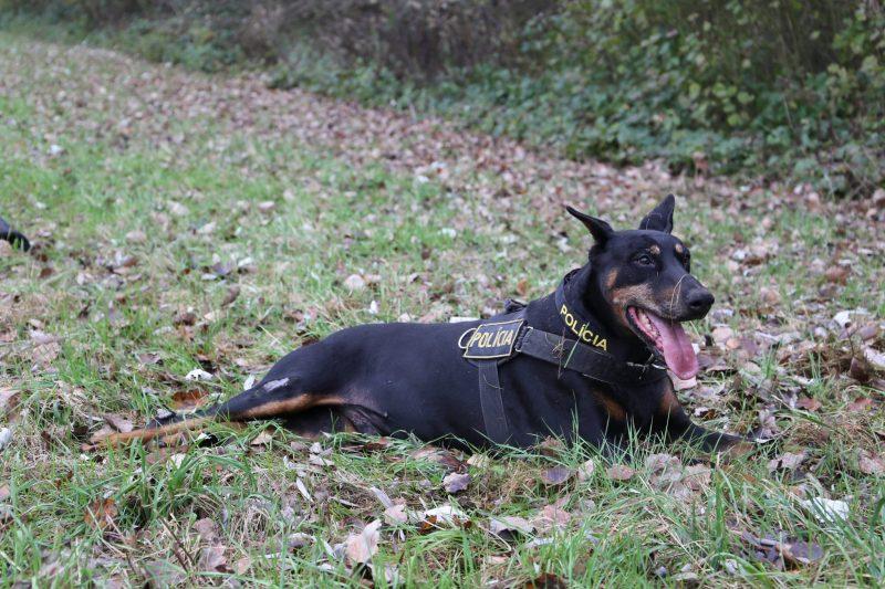 полиция собака